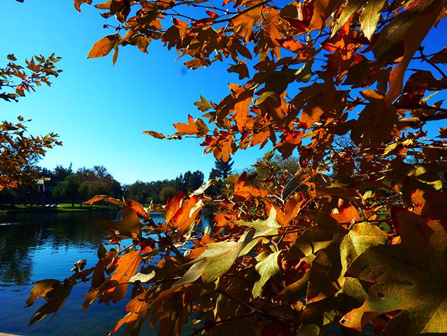 As Autumn Colors Fall